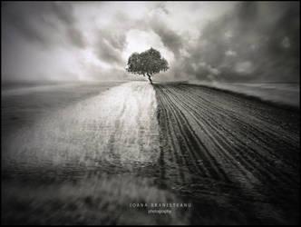 Summer Tree by ioanabranisteanu
