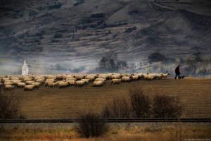 The Lonley Shepherd
