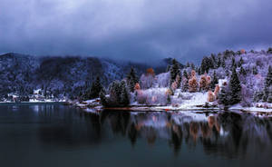 Winter Magic - Colibita by ioanabranisteanu
