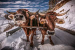 Winter in Romania by ioanabranisteanu
