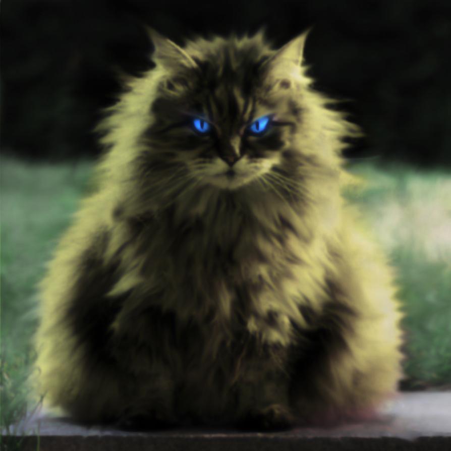 fantasy cat by mohammad1214