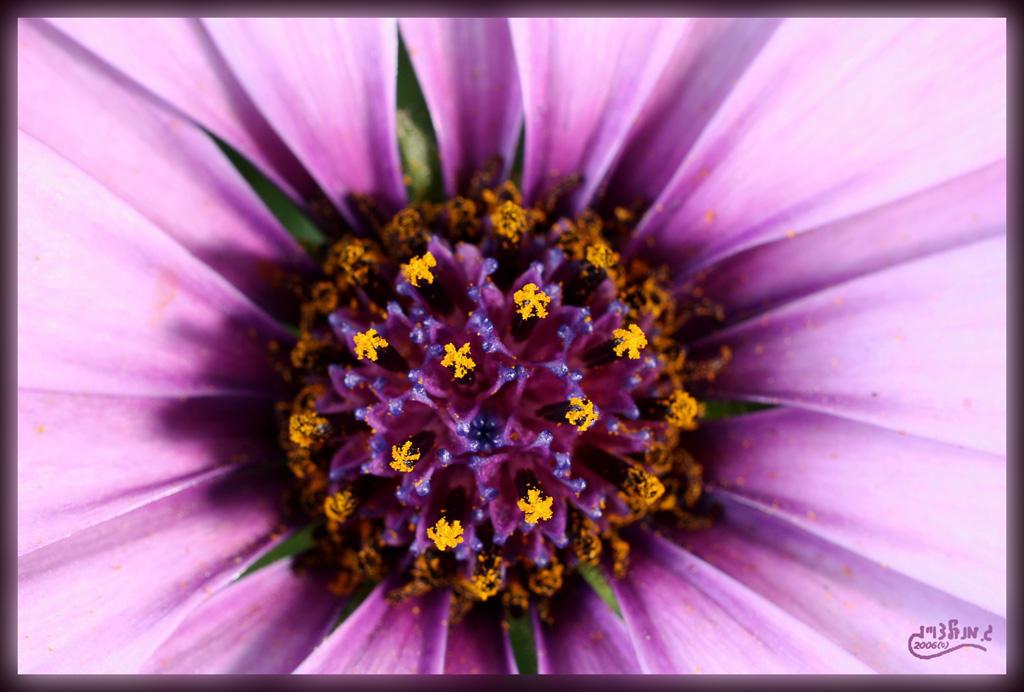 Purple by gilonm