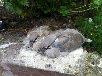 Baby Doves by DazGames