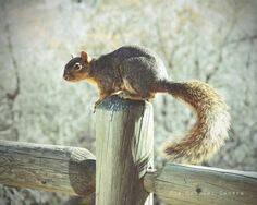 I Found a Squirrel! :) by BroadwayBound23