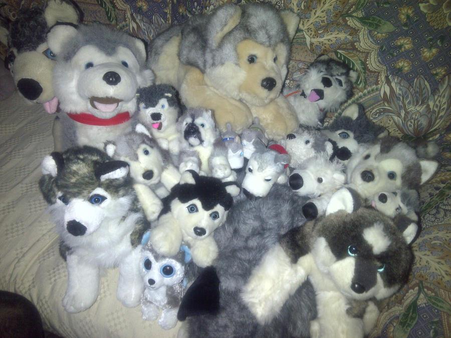 my huskey plush collection