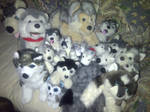 my huskey plush collection