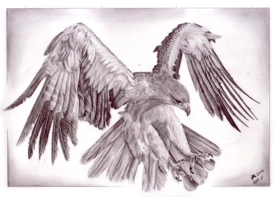 Tawny Eagle Sketch By VillKat Arts On DeviantArt