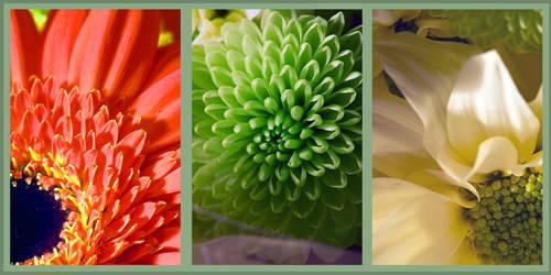 flowers by monkeyheadmushroom