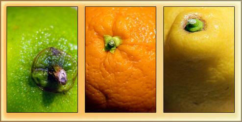 Citrus fruit by monkeyheadmushroom