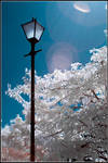 Lamp post by monkeyheadmushroom