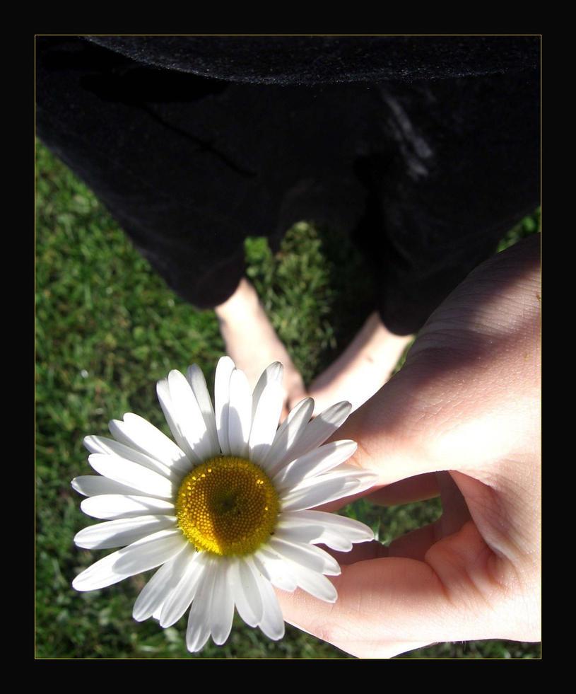 Larafairie-stock:Daisy by larafairie-stock