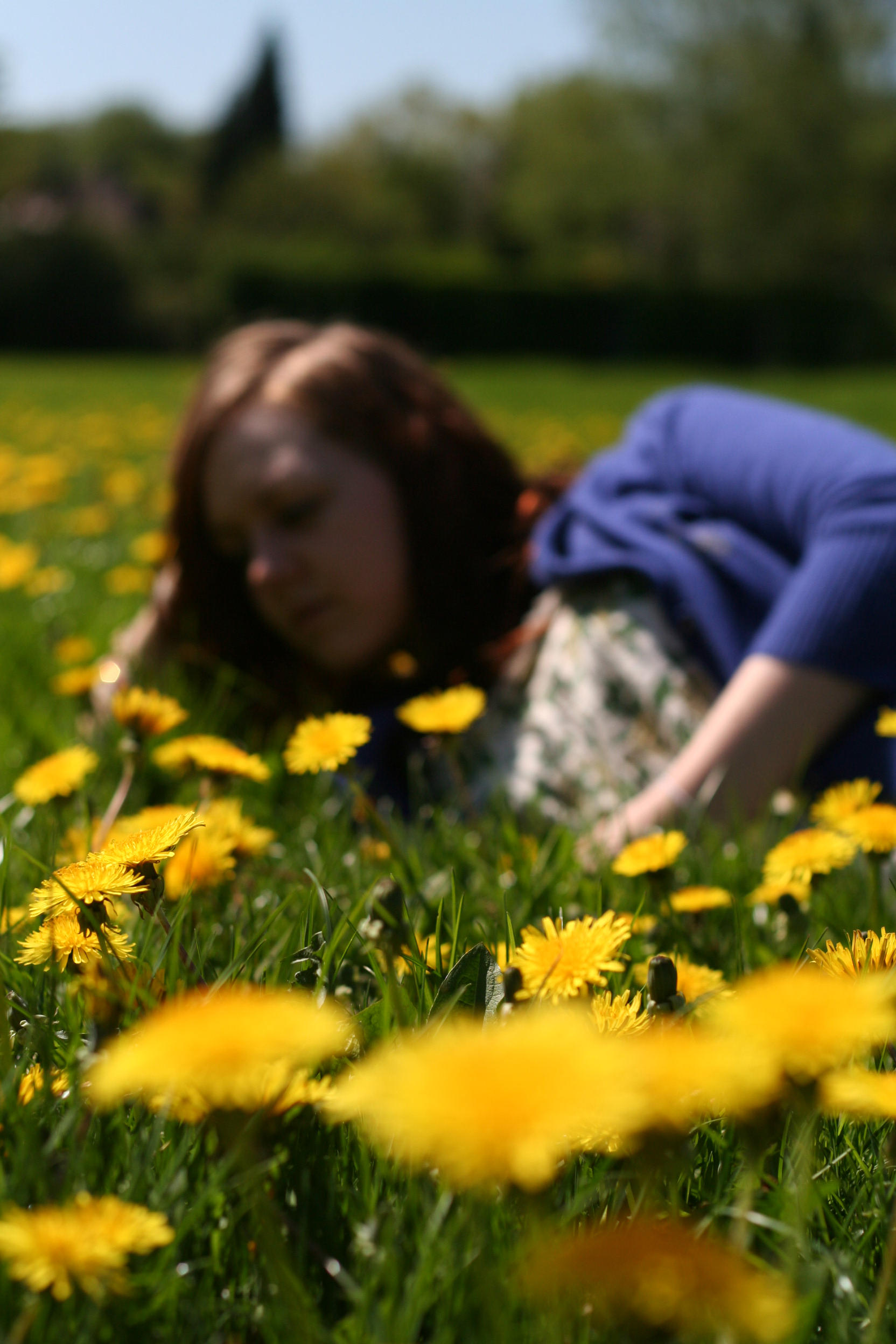 Larafairie-stock: Dandelions by larafairie-stock