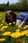 Larafairie-stock: Dandelions