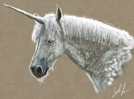 Unicorn by RedSaucers