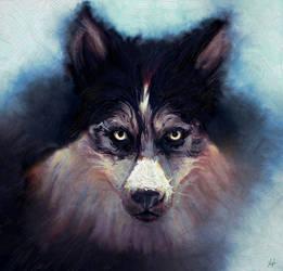 Husky by RedSaucers