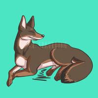 Coyote Doodle