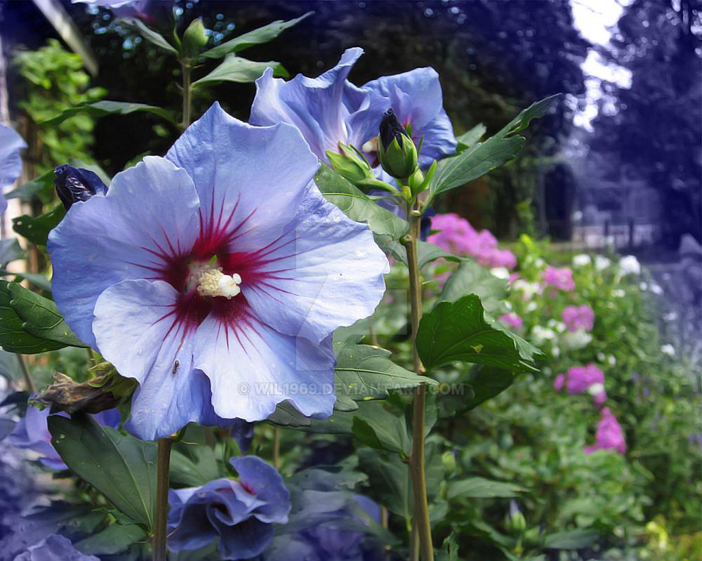 [Image: flower1_by_wil1969-dajuk0o.jpg]