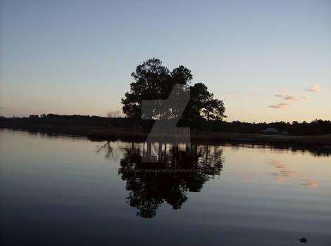 Oak reflections