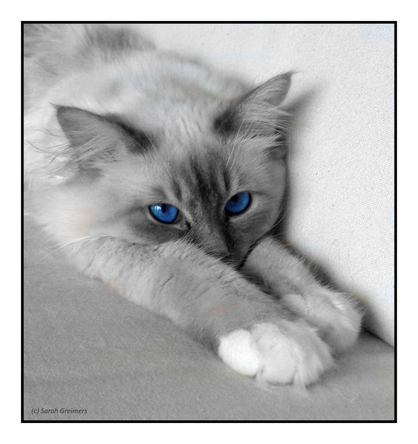 Light grey and white cat