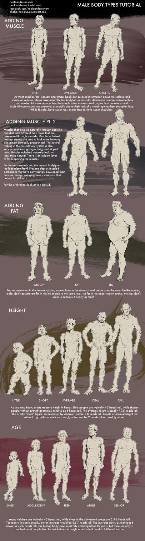 Male Body Types Tutorial by Phobos-Romulus