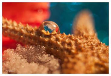 Starfishy by DigitalPhenom