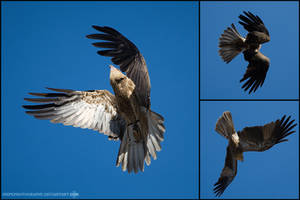 Fly. by SnipePhotography