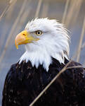 2010 Eagle 04 by JWFisher