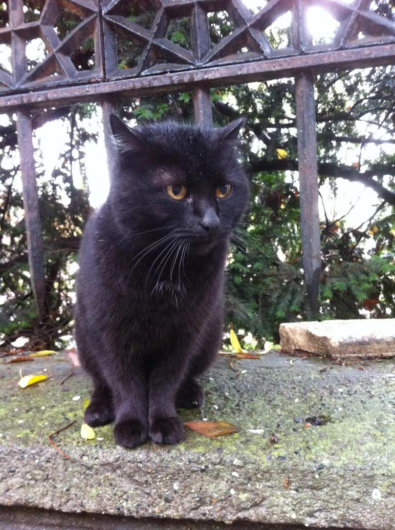 Black Cat Crouching by joyhorse13