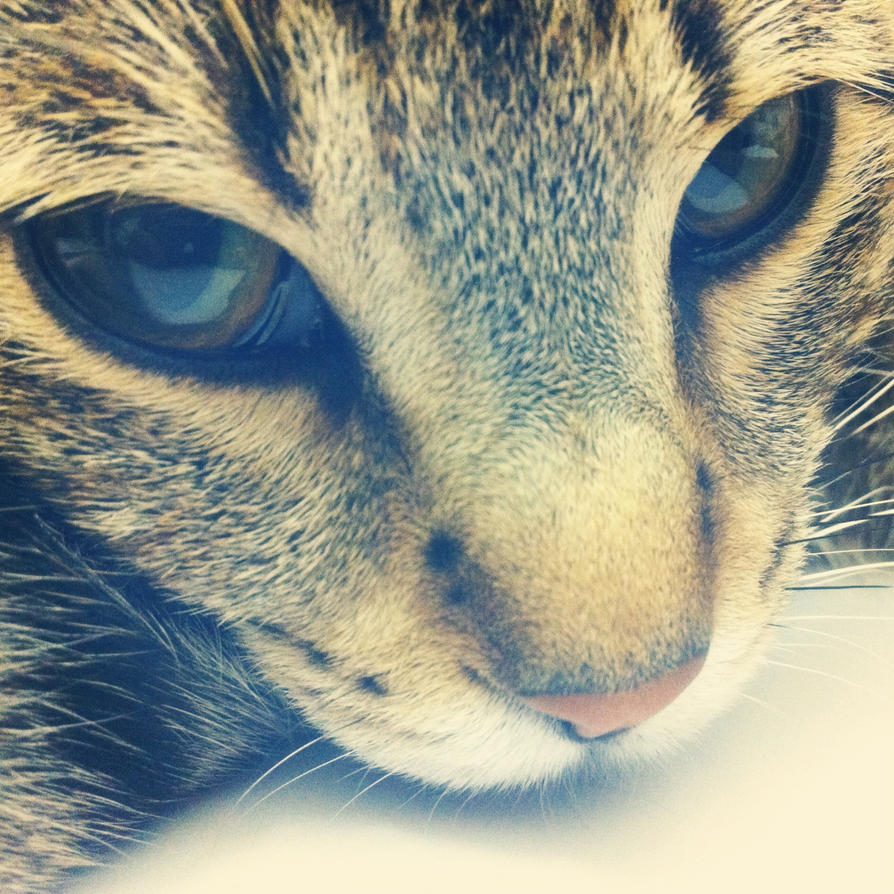 my cat XD by ArtFan780