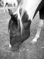 horsey 2 by flower-child88