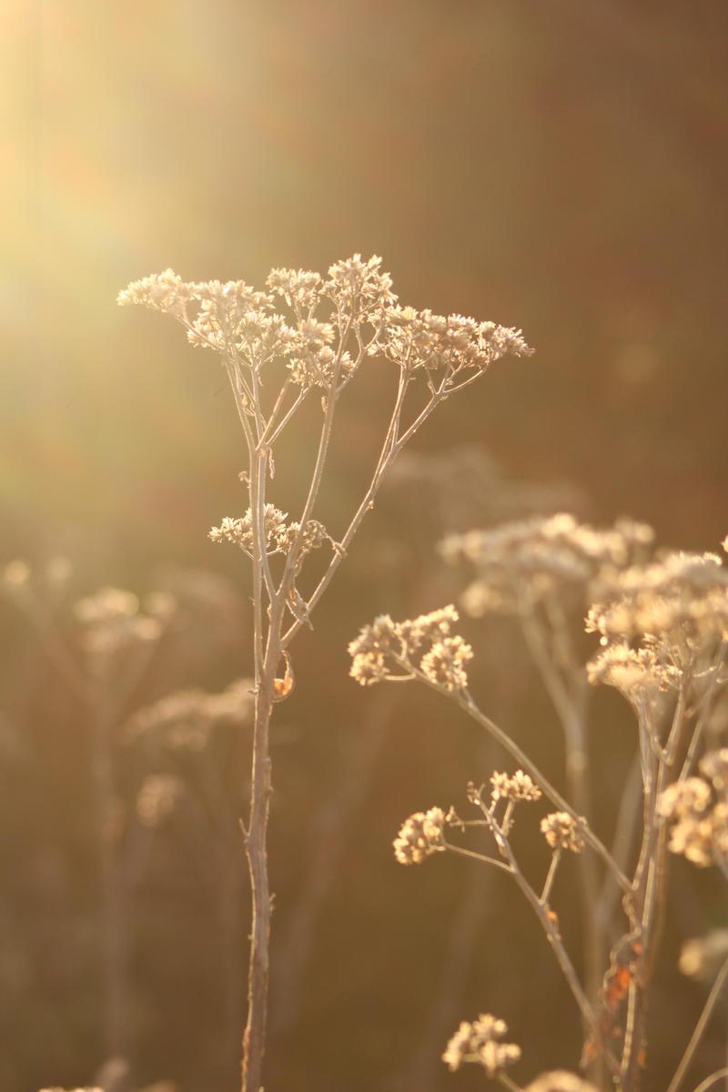 Winter Sun by akaleus