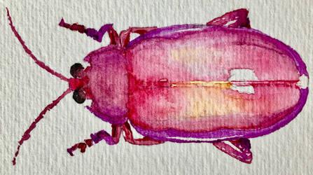 Watercolour pink beetle