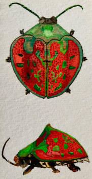 Watercolour beetle red and green