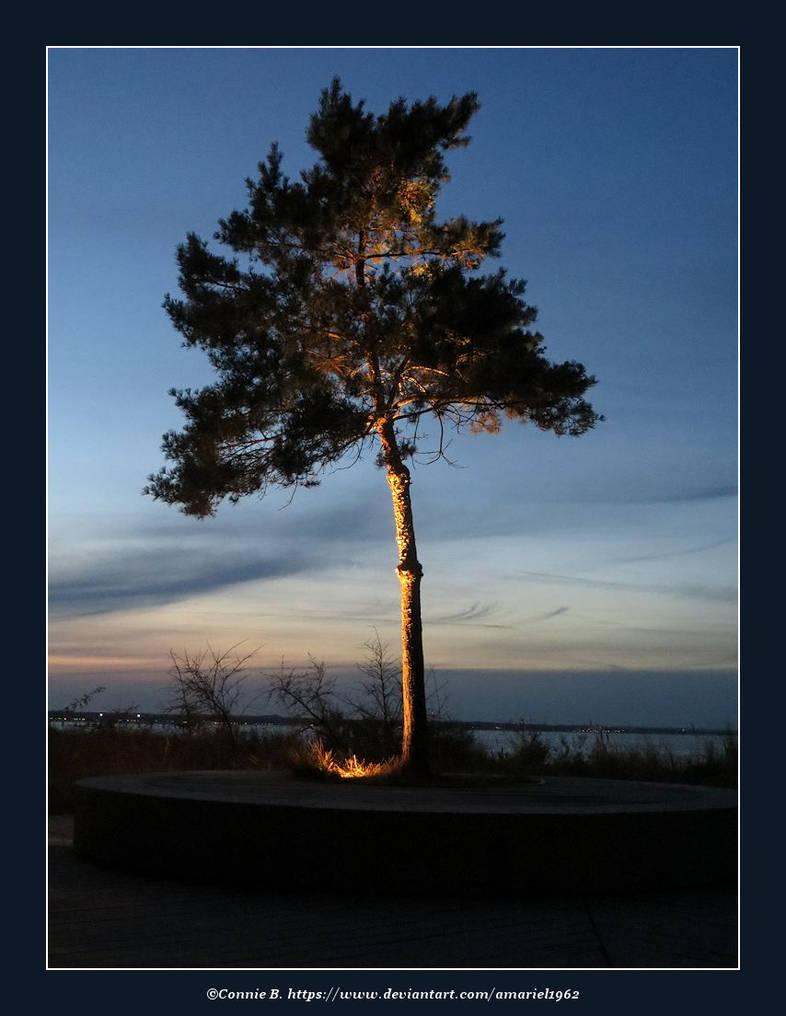 Light in a Tree by Amariel1962