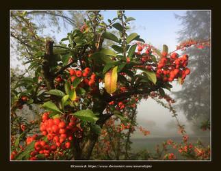 Autumn01 by Amariel1962