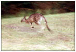 Fleeing Kangaroo by kleinerewoelfin