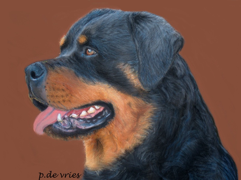 Rottweiler Pencil Drawing
