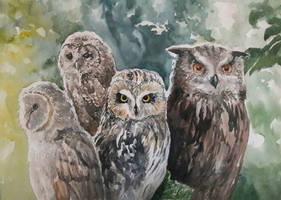 Owls by Entar0178