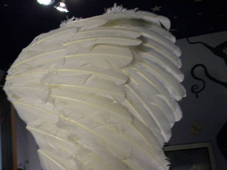 Swan Wings WIP 4