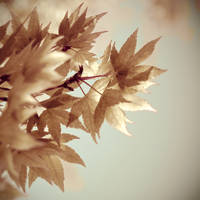 Ready To Fall by 1Elevin1