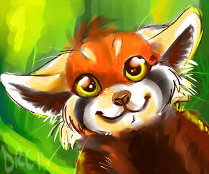 Red Panda doodle by Synthucard