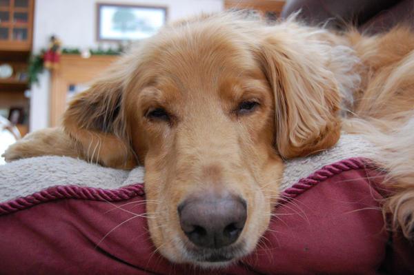 Sad puppy by nwm664-09