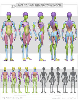 3D Sycras Simplified Anatomy