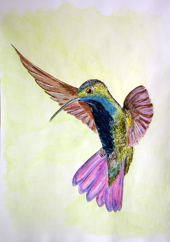 colibri -watercolor and ink- A3 by ignosc