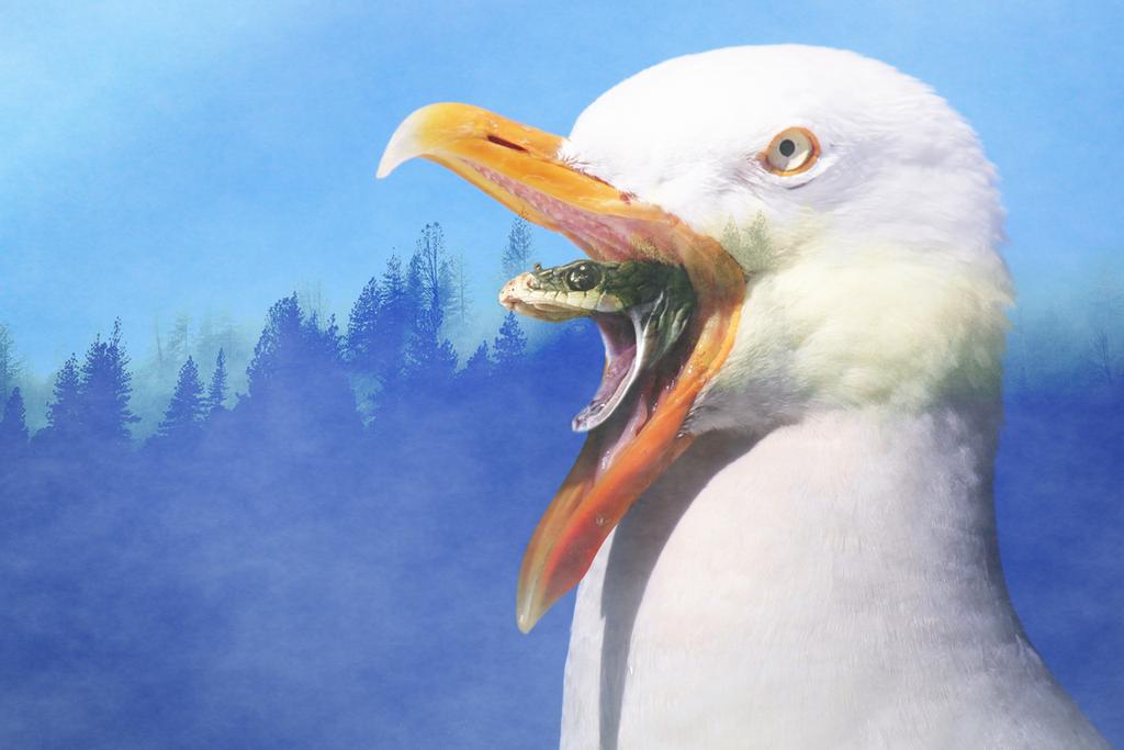 Snake 'n Seagull by 3Amanda14