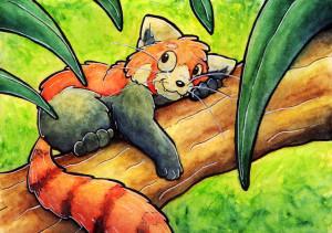 Petit-Panda-Roux's Profile Picture