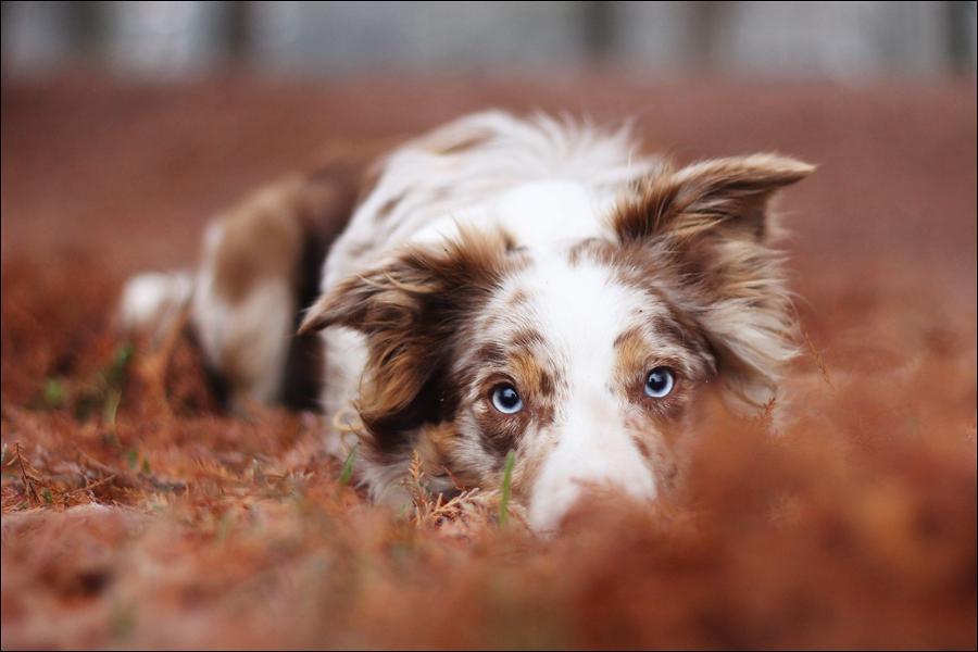 Blue eyed beauty by jollyvicky