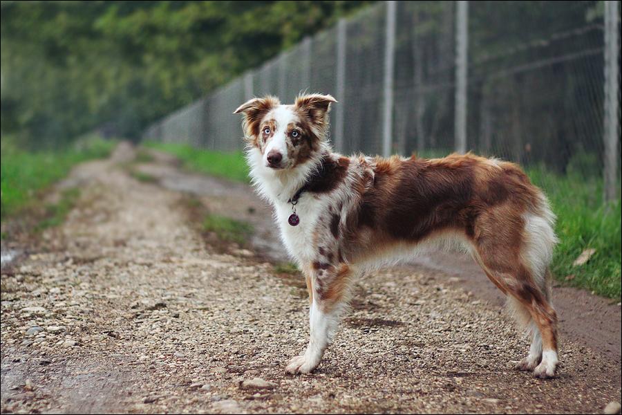 Jolly Vicky from Doggone Borders by jollyvicky