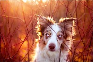 Sunshine by jollyvicky