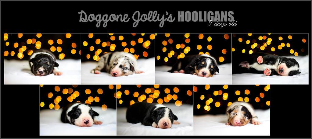 Doggone Jolly's Hooligans by jollyvicky